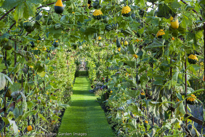 Ornamental gourd tunnel, view to urn