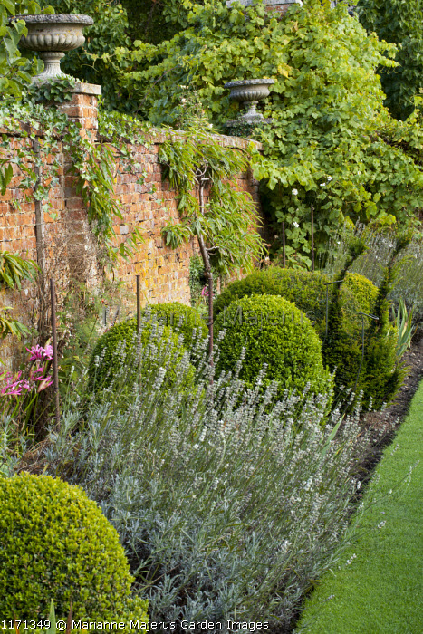 Box topiary in walled garden border