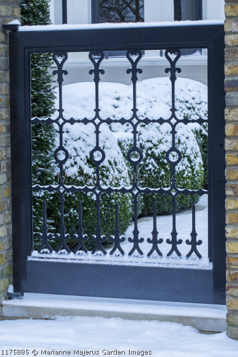 Front garden gate, large clipped box balls lining garden path