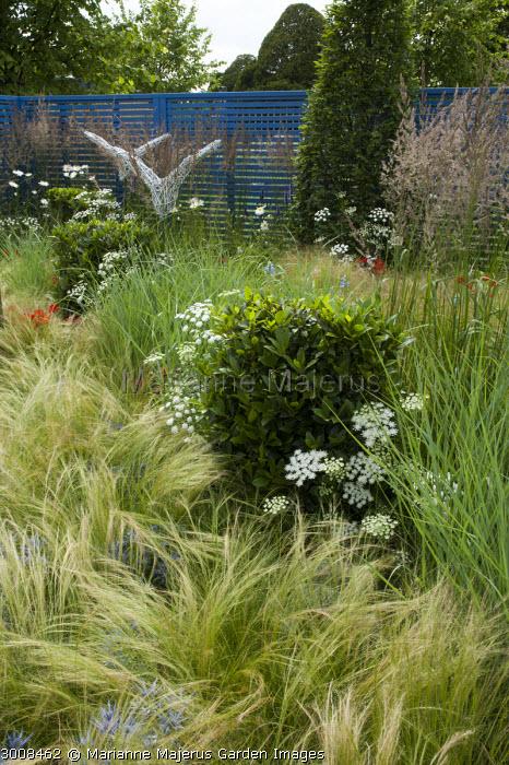 Grasses border, Stipa tenuissima, Ammi majus, Carpinus betulus, clipped bay tree, Calamagrostis x acutiflora 'Karl Foerster'