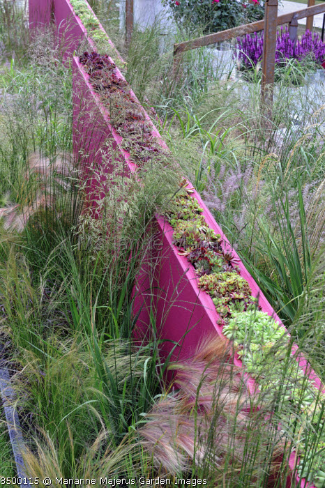 Drift of grasses on either side of low dividing sloping wall with sempervivums planted on top of the wall