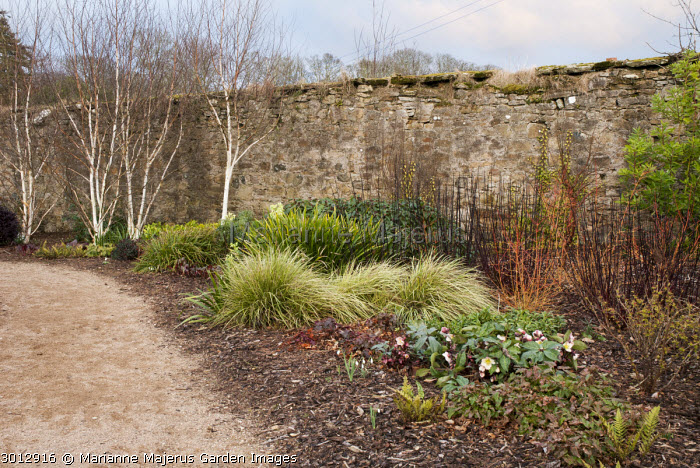 Winter garden, Cornus sanguinea 'Midwinter Fire', Cornus alba 'Kesselringii'