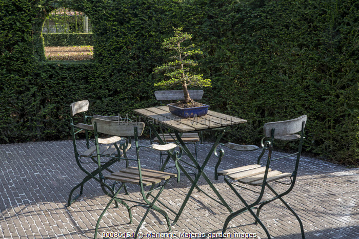 Wooden table and chairs on stone patio, window in yew hedge, bonsai in container, garden 'room'