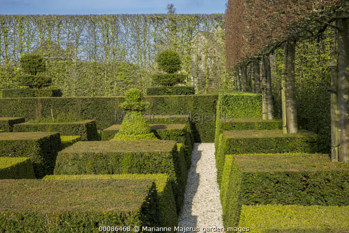 Contemporary topiary garden, pleached tree screen and hedges