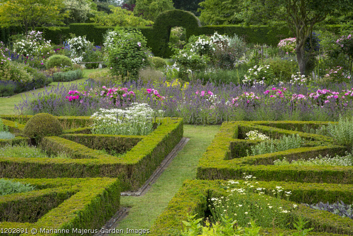 Clipped box parterre, Rosa mundi in a sea of Nepeta racemosa 'Walker's Low'