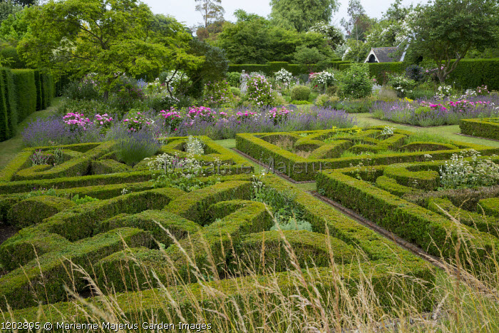 Knot garden, clipped box parterre, Rosa mundi and Nepeta racemosa 'Walker's Low'