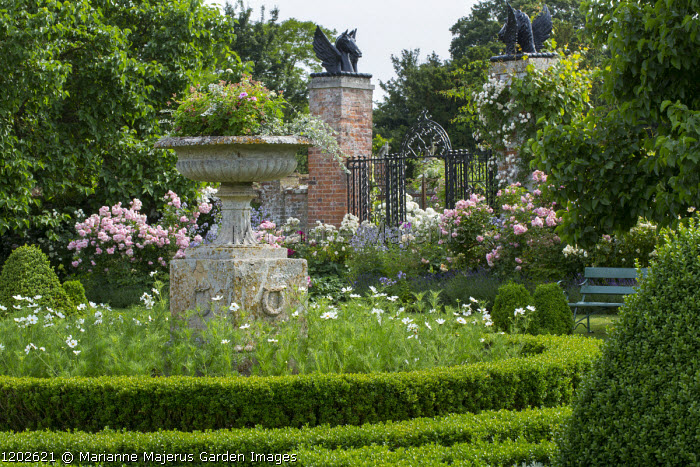 Low clipped box hedges around classical stone urn, Cosmos bipinnatus, roses