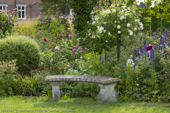 Stone bench in rose garden, delphiniums, standard trained Rosa 'Albéric Barbier'