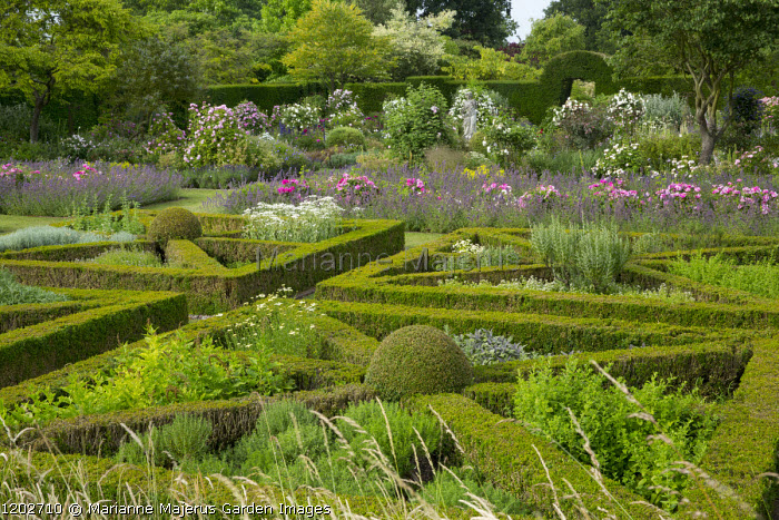 Herb parterre, mint, sage, thyme, Rosa mundi and Nepeta racemosa 'Walker's Low'