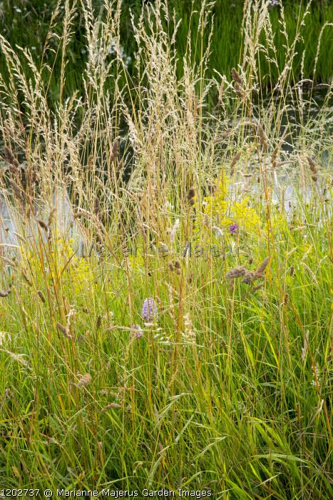 Long grass meadow