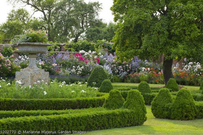 Low clipped box hedges around classical stone urn, Cosmos bipinnatus, roses, campanulas and alstroemeria