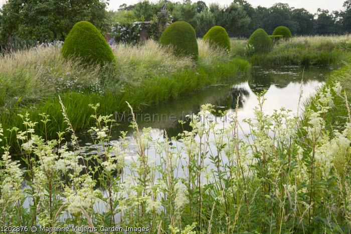 Filipendula ulmaria by moat, yew topiary in long grass meadow