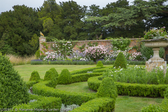 Box parterre, roses in lavender-edged border, large classical urn