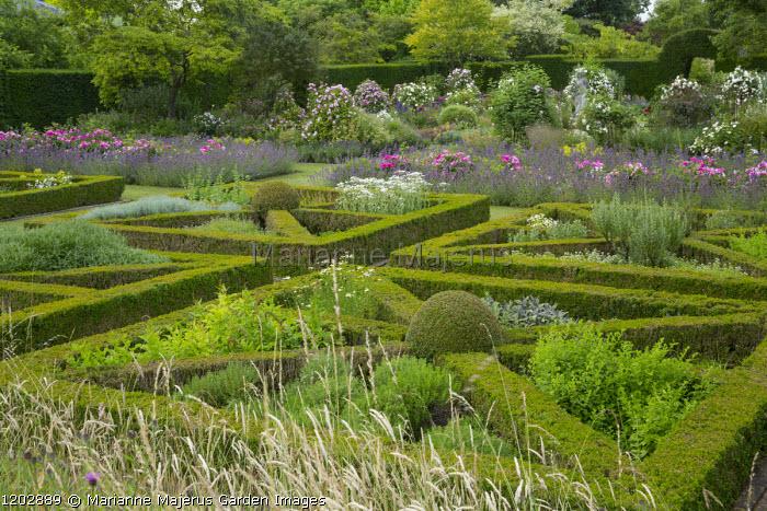Herb parterre, Rosa mundi and Nepeta racemosa 'Walker's Low'