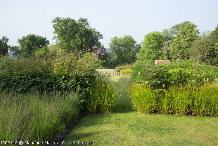 Beech hedge, Molinia caerulea subsp. caerulea 'Moorhexe', lawn