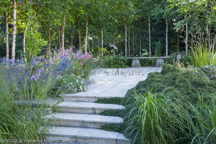 Steps to patio, wooden bench, Dierama pulcherrimum, Eryngium bourgatii 'Oxford Blue', birch woodland, erodium, cotoneaster, Molinia caerulea subsp. arundinacea 'Transparent'