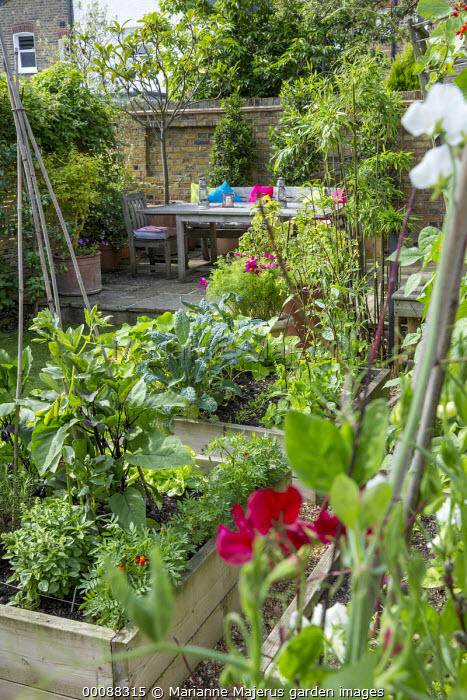 Aubergine 'Moneymaker', Pisum sativum 'Early Onward', French marigolds 'Red Brocade' in raised beds, view to table and chairs