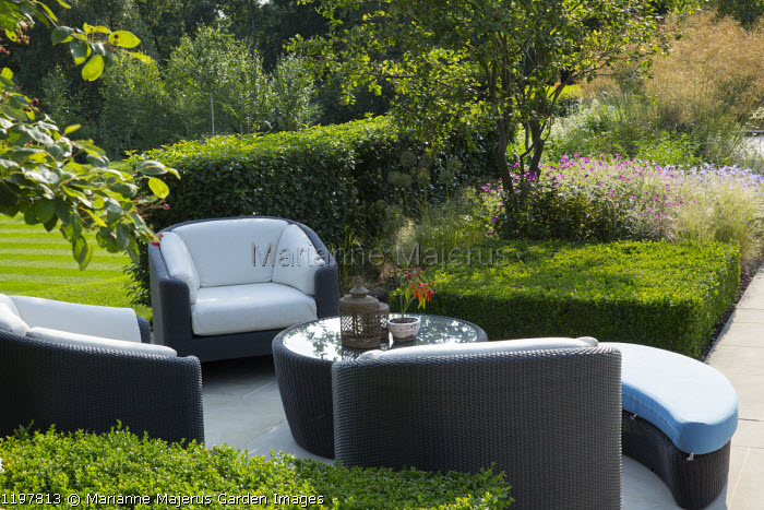Contemporary Rattan chairs around table on patio, Prunus lusitanica and Buxus sempervirens hedges, multi-stemmed Amelanchier lamarckii, Geranium 'Johnson's Blue' and 'Patricia'