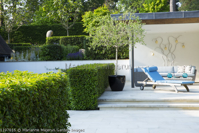 Recliner lounger chair on terrace, contemporary pavilion, Prunus lusitanica hedges, olive tree in container