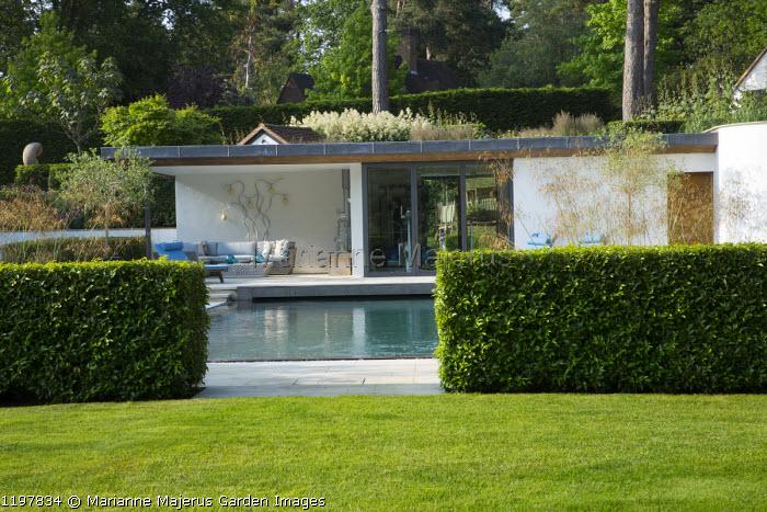 Prunus lusitanica hedge, contemporary pavilion, swimming pool