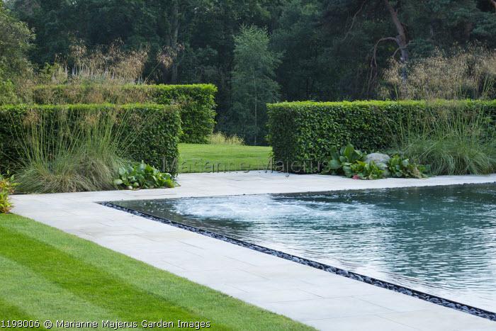 Swimming pool, stone paving, Prunus lusitanica hedges, Stipa gigantea