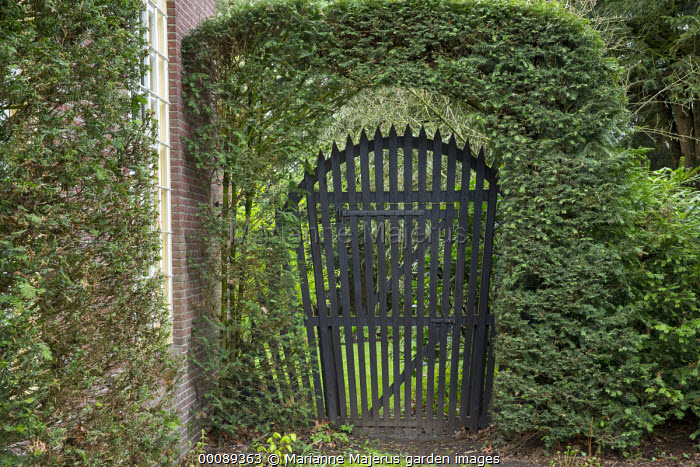Black arch-topped gate in yew hedge