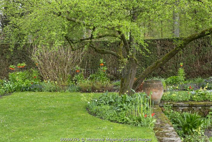 Spring garden, Fritillaria imperialis