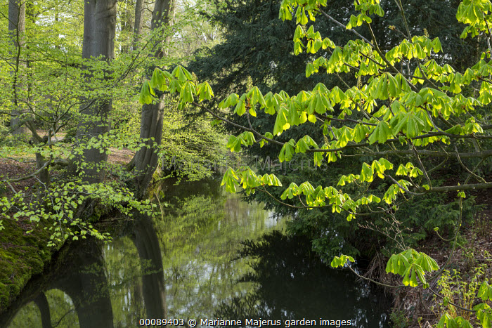 New spring growth on trees overhanging river