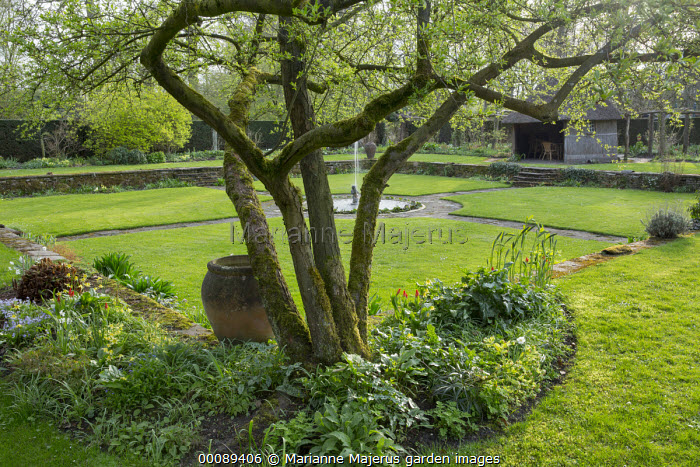 Large urn in spring border under tree, fountain and pond in formal garden