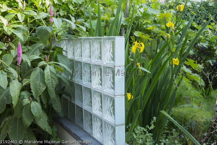 Glass brick screen, Phytolacca acinosa, Iris pseudacorus