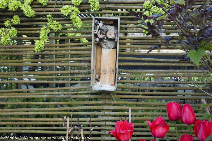 Insect hotel, tulips, Ulmus glabra 'Camperdownii'