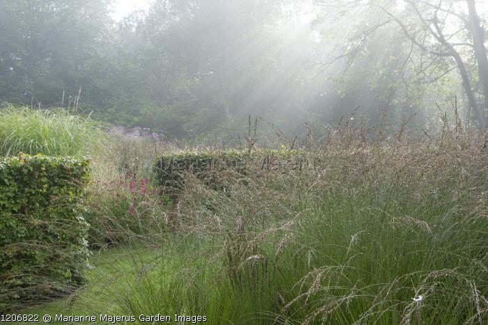 Beech hedges, Molinia caerulea subsp. caerulea 'Heidebraut', Penstemon 'Andenken an Friedrich Hahn' syn. 'Garnet'