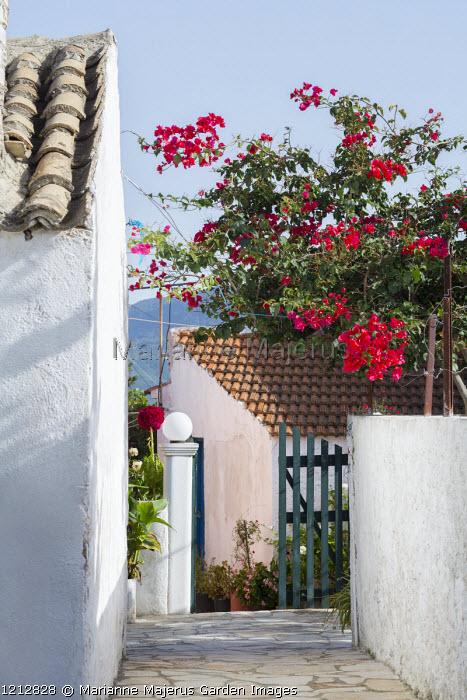 Mediterranean courtyard, bougainvillea