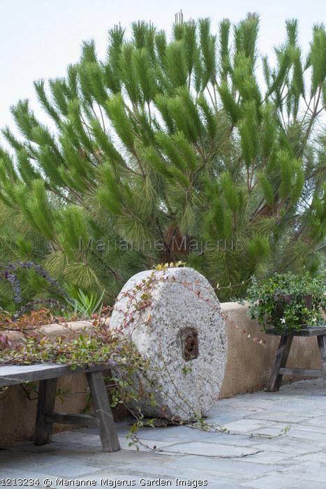 Millstone on Mediterranean terrace, Pinus halepensis