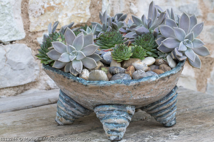 Sempervivums and succulents in homemade ceramic pot
