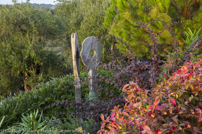 Oak sculpture, 'Wherever you are is called Here', in border, Berberis thunbergii, Trachelospermum jasminoides, Pinus halepensis