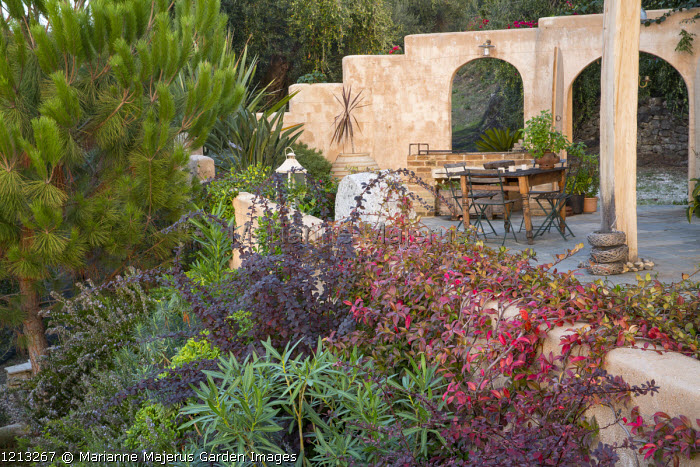 Mediterranean terrace, table and chairs, Trachelospermum jasminoides climbing over wall, Pinus halepensis, Berberis thunbergii