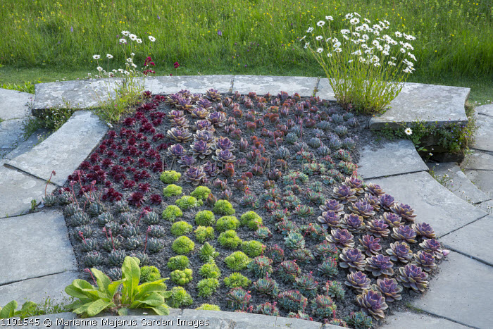 Succulents in border by steps