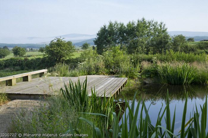 Wooden jetty over natural pond, Iris pseudacorus, Alnus glutinosa