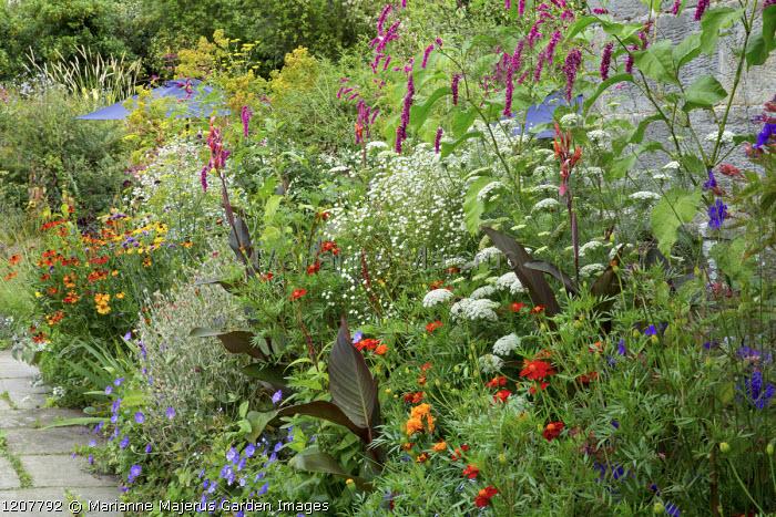 Border of annuals, Ammi majus, Tagetes 'Cinnabar' and 'Harlequin' in border with Persicaria orientalis, Helenium 'Sahin's Early Flowerer', Canna indica 'Purpurea'