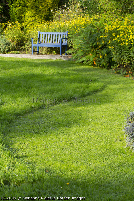 Wavy mown lawn, long grass, Helianthus 'Lemon Queen' in border, blue painted bench