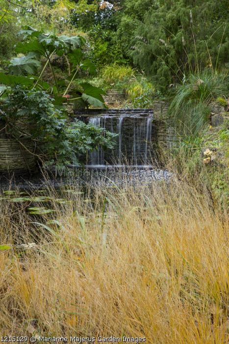 Waterfall, Molinia caerulea subsp. caerulea 'Poul Petersen', Gunnera manicata
