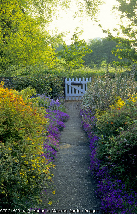 Front garden, view along pathedged with aubretia towards white picket gate