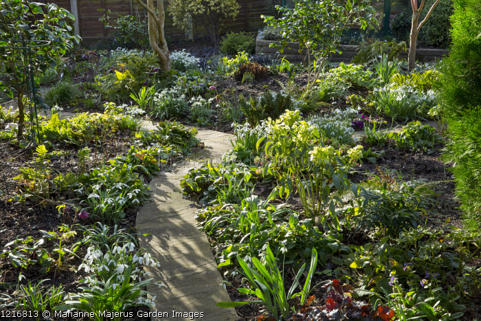 Path through early spring border with snowdrops and hellebores, Galanthus 'Bill Bishop', 'Bitton' and 'Wisley Magnet'