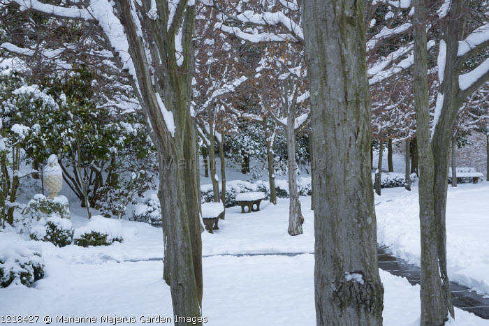 Tree-lined avenue in snow, view to bench