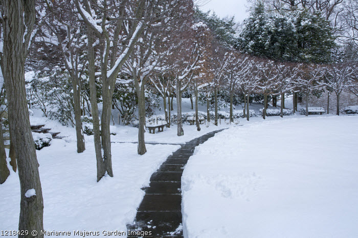 Path cleared in the snow, tree-lined avenue