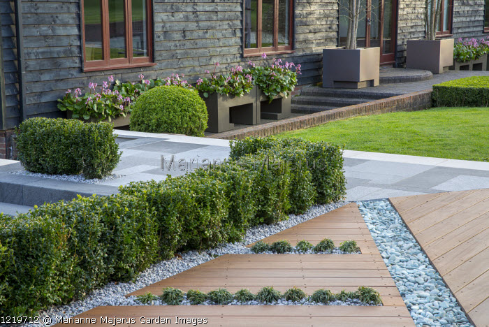 Balau hardwood decking with Ophiopogon japonicus 'Minor' in rills, pebble rill, low clipped box hedge, bergenia in containers by house