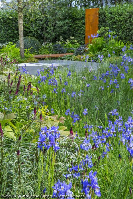 Drift of Iris sibirica 'Perry's Blue', Lysimachia atropurpurea 'Beaujolais', Cor-Ten steel bridge and panel