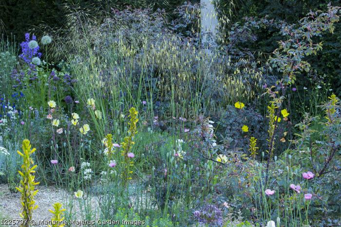 Stipa gigantea, Oenothera odorata 'Sulphurea', Papaver dubium subsp. lecoqii var. albiflorum, Asphodeline lutea, Rosa glauca