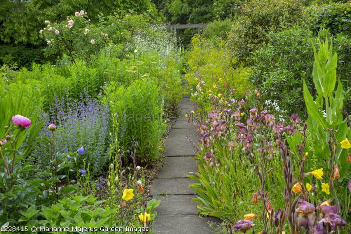 View along path, roses, nepeta, oenothera, Iris 'Benton Nutkin', Crambe cordifolia